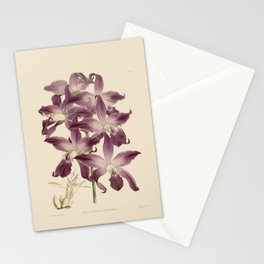 R. Warner & B.S. Williams - The Orchid Album - vol 01 - plate 049 Stationery Cards