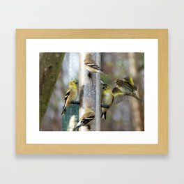 Goldfinches at the Feeder Framed Art Print