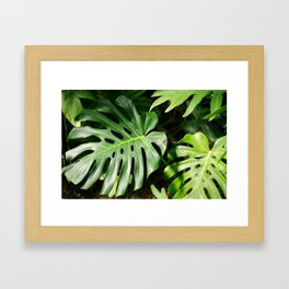 Tropical Plants Framed Art Print