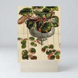 Flower saxifraga sarmentosa18 Mini Art Print