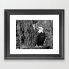 Haliaeetus leucocephalus Framed Art Print