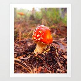 Fairy Mushroom Blue Mountains Art Print