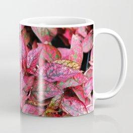 Hypoestes Coffee Mug