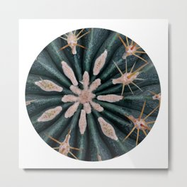 Cactus Plant Close-up Photogrpahy Round Photo Metal Print