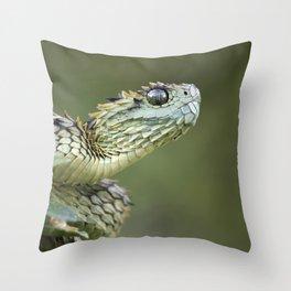 Hairy Bush Viper (Atheris hispida) Throw Pillow