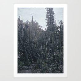 Cactus dream Art Print