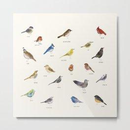 little nature birds Metal Print
