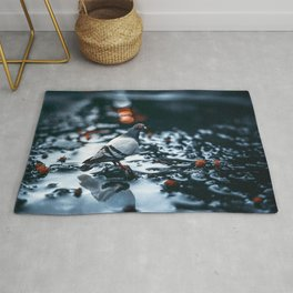 Gracious Magnificent Pigeon Solo On Lonely Wet Autumn Road Ultra HD Rug