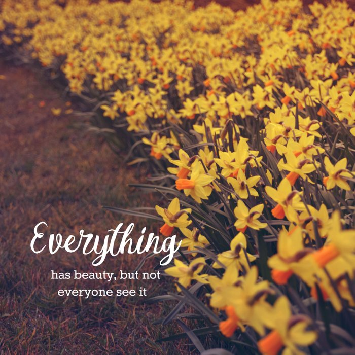 Everything has beauty Comforters
