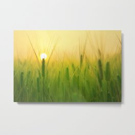 Morning Barley Field Metal Print