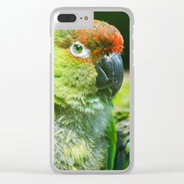 Nanday Parakeet Clear iPhone Case