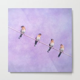 American Blue Birds on a wire Metal Print