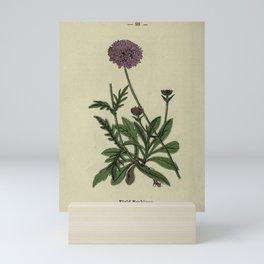 Flower Field Scabious scabiosa arvensis19 Mini Art Print