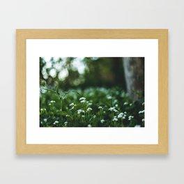 Flower photography by stephan cassara Framed Art Print