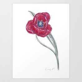 Tulip 04 Botanical Flower Art Print