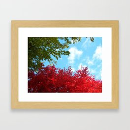 Japanese Maple in Fall with Blue Sky Framed Art Print