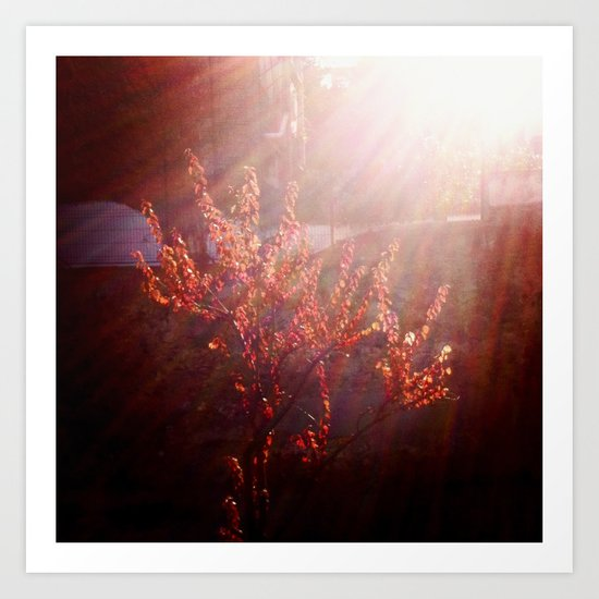Red In The Afternoon Sun Art Print