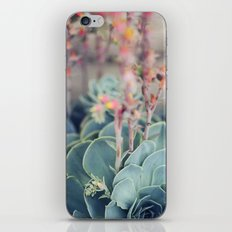 Echeveria #4 iPhone & iPod Skin