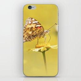 Orange butterfly feeding on yellow marigolds iPhone Skin