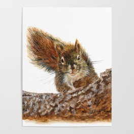 Cheeky the Red Squirrel by Teresa Thompson Poster
