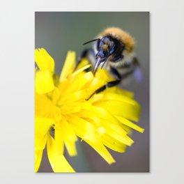 Busy buzzy bumble bee Canvas Print