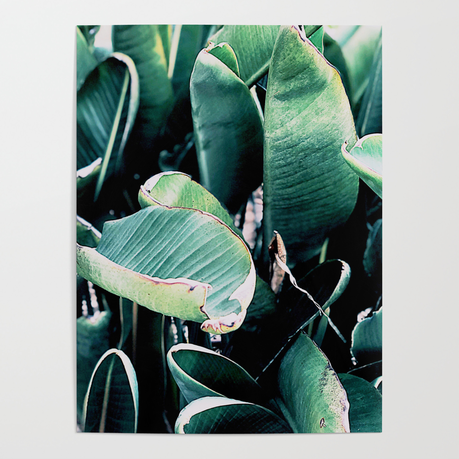 Leaves Green Tropical Plants Neutral Minimal Modern Wall