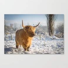 Highland Cow in the snow Canvas Print