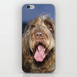 Brown Roan Italian Spinone Dog Head Shot iPhone Skin