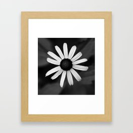 Black Eyed Susan Framed Art Print
