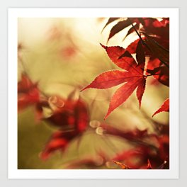 Autumn Photography - Thin Red Leaves Art Print