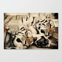 I'll keep you warm... Canvas Print