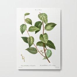 Planer tree (Planera ulmifolia) from Traite des Arbres et Arbustes que lon cultive en France en plei Metal Print