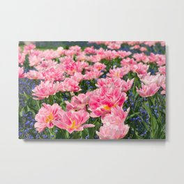 Blue forget-me-nots with pink tulips mix Metal Print