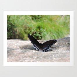 Butterfly on Rock Art Print