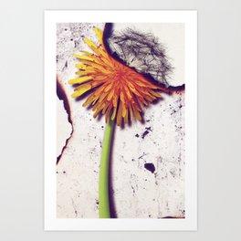 Death Of Beauty Art Print