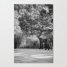 Floofster Canvas Print