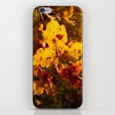 Colors of Fall iPhone & iPod Skin