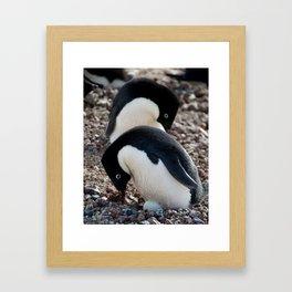 Adelie Penguins and Egg Framed Art Print