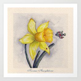 Future Botanical Studies - Daffodil Art Print