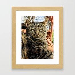 Big Boi (Lanai Cat Sanctuary) Framed Art Print