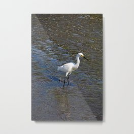 Provocative Pretender- vertical Metal Print