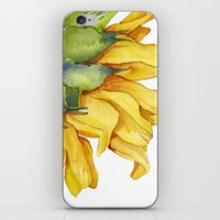 sunflower iPhone & iPod Skins featuring Sunflower by Cindy Lou Bailey