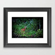 Backyard Bambi Framed Art Print