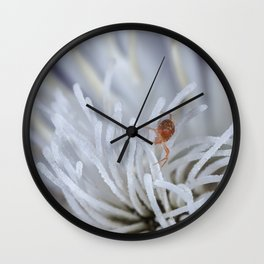 Clover Mite on a clematis Wall Clock