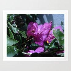 Flowers #8 Art Print