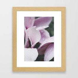 Pink Daisy still Life, flower fine art print, interior design, home decoration, bedroom Framed Art Print