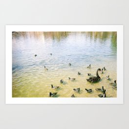 family of quacks Art Print