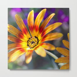 Carefree Summer Flower Close-up Metal Print