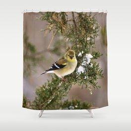 Professor Goldfinch Shower Curtain