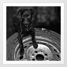 b/w dog Art Print